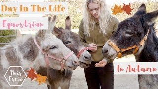 Download Day In The Life of an Equestrian in Autumn | Donkey Grooming and Pony Pumpkins | This Esme Video