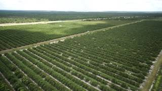 Download Venus Grove in Highlands County, Florida - 159.40 +/- Acre Citrus Grove FOR SALE Video