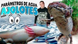 Download Parámetros de agua para AJOLOTES 💧💦(Axolote Mexicano) axolotl Video
