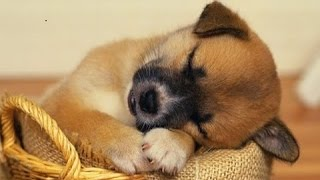 Download SLEEP MUSIC For Dogs, Cats & All PETS ♥♥♥ Stress Relief, Anxiety, Healing Music 🎧 PET THERAPY Video