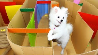 Download Funny Race Between Snowball Dog And Mochi Hamster Running In Hot Air Balloon Maze Video