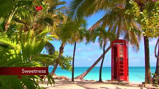 Download 3 hours Smooth Jazz Saxophone with the Sound of Ocean Video