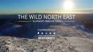 Download The Wild North East: Scotland's Natural Gem Video