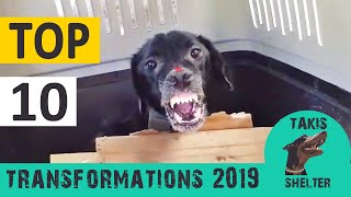 Download Top 10 most amazing animal rescue transformations of 2019 - Takis Shelter Video