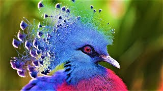 Download 10 Most Beautiful Birds on Planet Earth 2 Video