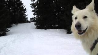 Download schäferhund attacke Video