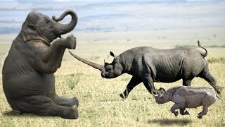 Download Elephant vs Rhino Real Fight - Ephant Shows Who's Boss and the unexpected Video