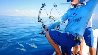 Download Bow Fishing for Tuna Fish Video