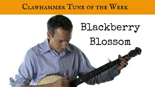 Download Clawhammer Banjo: Tune (and Tab) of the Week - ″Blackberry Blossom″ Video