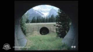 Download Banff National Park - Survival on the move Video