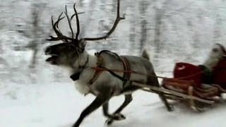 Download Reindeer Run With Santa's Sleigh Through the Snow! Video