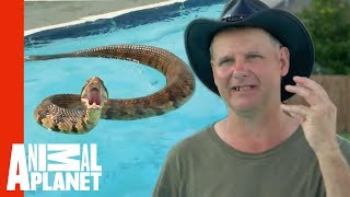 Download Face-to-Face with a Cottonmouth Snake Video