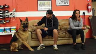 Download Training | Kobe Board and Train Drop Off - Last Resport | Solid K9 Training Dog Training Video