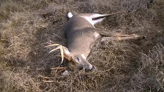Download Big 8 Point Swamp Buck Down! Video