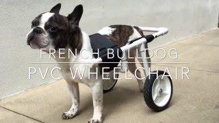Download DIY French Bulldog PVC Dog Wheelchair Video