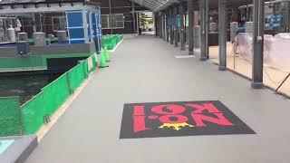 Download Narita Koi Farm Summer July 2017 Video