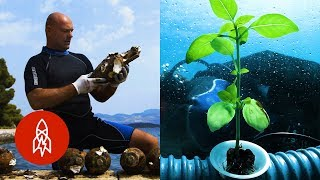 Download Get Hungry for These Underwater Food Stories Video