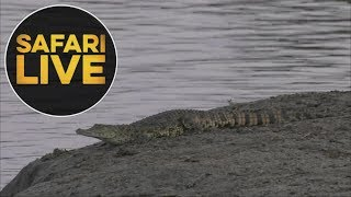 Download safariLIVEs: Episode 6 Video