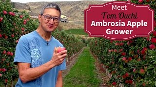 Download Meet Your BC Ambrosia Apple Growers - Tom Ouchi Video