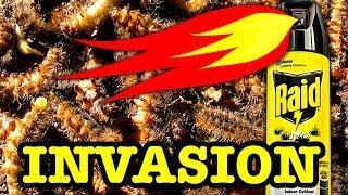 Download 10000 Stinging Caterpillars Vs 1000 Degree Raid Flamethrower Extreme Pest Control Video