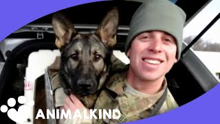 Download Army dog races into arms of soldier after 3 years apart Video