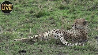Download safariLIVE - Sunset Safari - September 13, 2018 Video