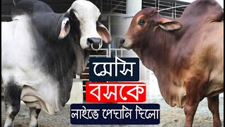 Download Big Cow in Bangladesh 2019 - Big Cow Boss and Messi Video