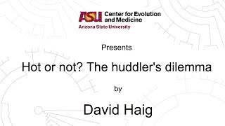 Download Hot or not? The huddler's dilemma   David Haig   CEM Video