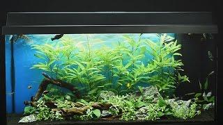Download Juwel Aquarium Primo 110 LED Einrichtungsbeispiel / Tutorial Video