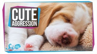 Download Why Do You Want to Squeeze Cute Things? Video
