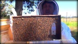 Download Honey Bees Back Yard Beekeeping Made Simple Video