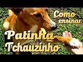 Download Adestramento - Patinha e Tchauzinho - 1º Treino Rodolfo e Cléo Video