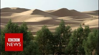 Download Why is Africa building a Great Green Wall? BBC News Video