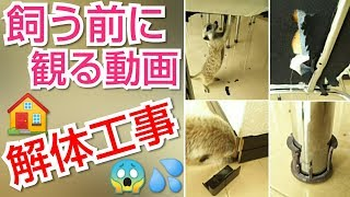 Download ミーアキャット イタズラ三昧‥ミーアVS飼い主の知恵比べ Video