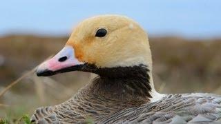 Download Alaska's Yukon Delta National Wildlife Refuge Video