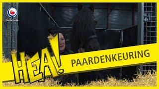 Download HEA! Struinen op de paardenkeuring Video