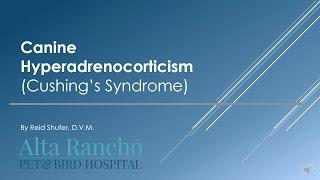 Download Canine Hyperadrenocorticism Video