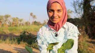 Download شابة مصرية تنتج الغاز من روث الحيوانات Video