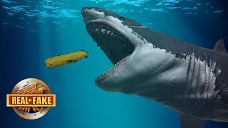 Download LIVE MEGALODON FOUND IN MARIANA TRENCH - real or fake? Video
