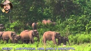 Download Ever Best Big Elephant Herd. Video