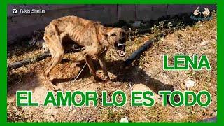 Download La historia de Lena, el Amor lo es todo Video