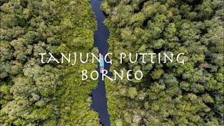 Download Wonderful Indonesia | Tanjung Puting National Park | Borneo Video