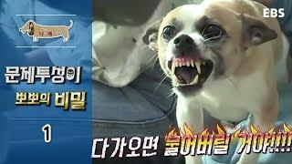 Download 세상에 나쁜 개는 없다 - 문제투성이 뽀뽀의 비밀 #001 Video