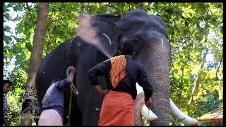 Download kerala elephant Pambady Rajan CHANGALAKILUKKAM Video
