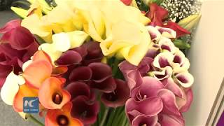 Download International Flower Expo in Kenya attracts hundreds Video