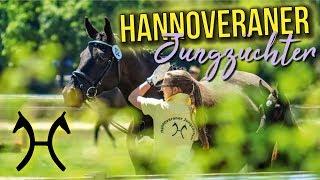 Download VERBANDSFINALE 2018 | Hannoveraner Jungzüchter | BinieBo Video