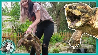 Download Pond for HUGE Snapping Turtles! Video