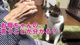 Download お母ちゃんの言葉を理解できるとしか思えない猫こむぎ Video