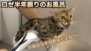 Download 半年ぶりにロゼを風呂に入れたら大変な目に・・・ Video