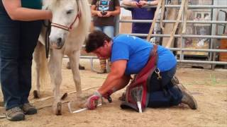 Download Severely overgrown horse hooves trimmed Video